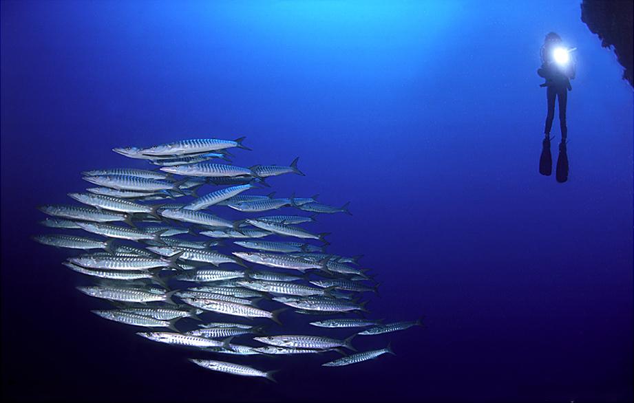 Download 81 Gambar Rangkaian Pancing Ikan Tenggiri HD Terbaru